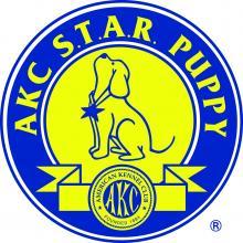 AKC Star Puppy